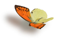 Butterfly isolated on white. Stock Images