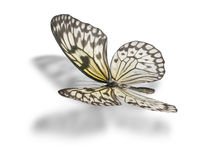 Butterfly isolated on white. Butterfly (Idea leuconoe, Paper Kite, Rice Paper, or Large Tree Nymph) isolated on white background. Clipping path included Royalty Free Stock Photos
