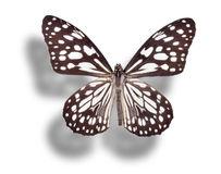 Butterfly isolated on white. Royalty Free Stock Photography
