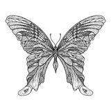 Butterfly isolated. Zentangle butterfly hand drawn indian sketch Stock Image