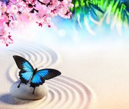 Butterfly In Japanese Rock Garden With Sakura Blossoms Royalty Free Stock Images