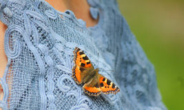 Butterfly on the jersey Royalty Free Stock Photo