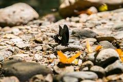 Butterfly at Kaeng Krachan National Park Stock Photo