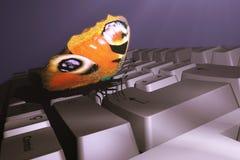 Butterfly on keyboard. Scene of the butterfly on keyboard Stock Photos