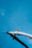 Butterfly landing and blue sky on water Royalty Free Stock Photo