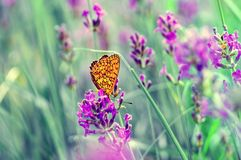 Butterfly on the lavender. Closeup in vintage colors Stock Photos