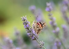 Beautiful butterfly on a flower stock images