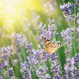 Butterfly and lavender. Vintage retro hipster style version Stock Photo