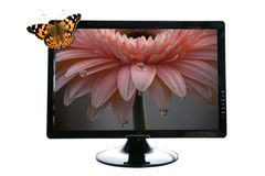 Butterfly on lcd stock image