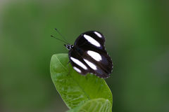 Butterfly on Leaf Stock Photo