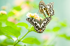 Butterfly on leaf. Animal, antenna, background Stock Photos