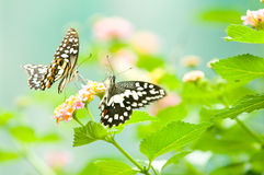 Butterfly on leaf. Animal, antenna, background Royalty Free Stock Photography