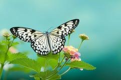 Butterfly on leaf. Beauty butterfly on  leaf. small DOF Stock Photo
