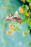 Butterfly on leaf. Beauty butterfly on  leaf. small DOF Royalty Free Stock Images