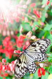 Butterfly on leaf. Animal, antenna Royalty Free Stock Image