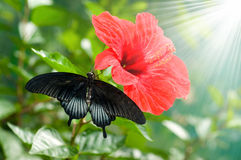 Butterfly on leaf. Animal, antenna Royalty Free Stock Images