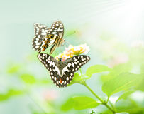 Butterfly on leaf. Animal, antenna Stock Image