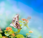 Butterfly on leaf. Beauty butterfly on  leaf. small DOF Royalty Free Stock Photos