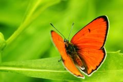 Butterfly on a leaf. Macro of a butterfly on a leaf Royalty Free Stock Photos