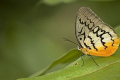 Butterfly on leaf. A photo of a butterfly at a butterfly farm Stock Photo