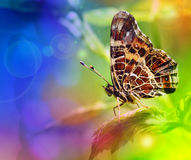 Butterfly on a leaf Stock Photos