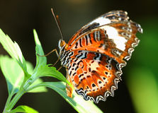 Butterfly on leaf Royalty Free Stock Photos