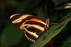 Butterfly on leaf Stock Photos