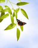 Butterfly on the leaf Royalty Free Stock Photo
