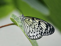Butterfly on a leaf Stock Images