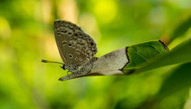 Butterfly. On leaf in the garden Royalty Free Stock Image
