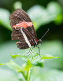 Butterfly on leaf. Butterfly on green leaf closeup macro Stock Image