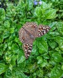 Butterfly on a leaf. Nature Environment Brown pattern background wallpaper Stock Photo