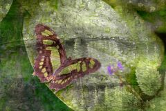 Butterfly on leaf oil. Beautiful Butterfly on leaf oil painting Royalty Free Stock Image