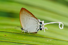 Butterfly on leaf. Butterfly in pang sida national park  thailand Stock Images