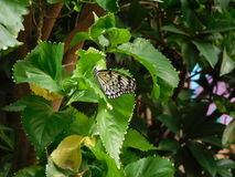 Butterfly On A Leaf. A photograph of a butterfly captured on a leaf Royalty Free Stock Photo