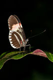 Butterfly on leaf plants Stock Photo