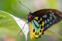 Butterfly on a leaf. Butterfly posed on a leaf Stock Photo