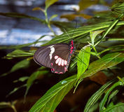 Butterfly on a Leaf Royalty Free Stock Photography