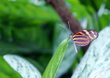 Butterfly on a leaf tip Royalty Free Stock Images
