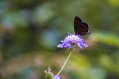 Butterfly leaning on flower. Beautiful isolated colored butterfly leaning on flower stock photography