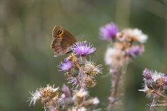 Butterfly leaning on flower. Beautiful isolated colored butterfly leaning on flower stock image