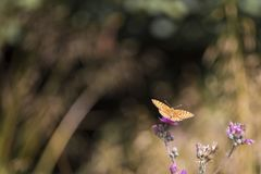Butterfly leaning on flower. Beautiful isolated colored butterfly leaning on flower stock photos