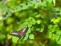 Butterfly on leaves royalty free stock photo