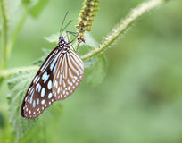 Butterfly on a leaves Stock Image