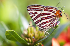Butterfly on a leaves Royalty Free Stock Photos