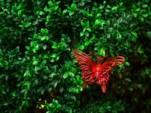 Butterfly on leaves. Royalty Free Stock Photography