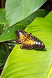 Butterfly on the leaves Royalty Free Stock Photography
