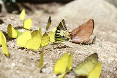 Butterfly Leaves Royalty Free Stock Image