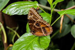 Butterfly on leaves. Made in macro and fast shot Stock Photos
