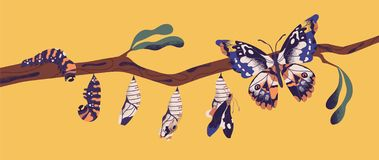 Butterfly life cycle - caterpillar, larva, pupa, imago eclosion. Stages of metamorphosis, growth and transformation